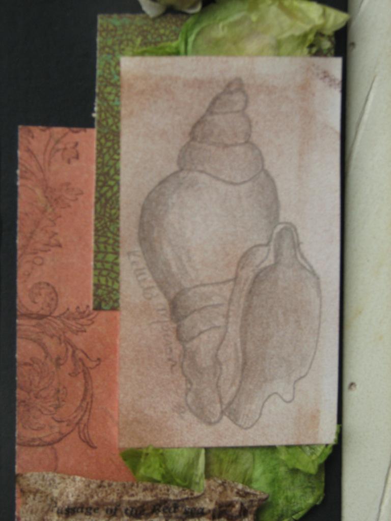 Sea Shell #12 3
