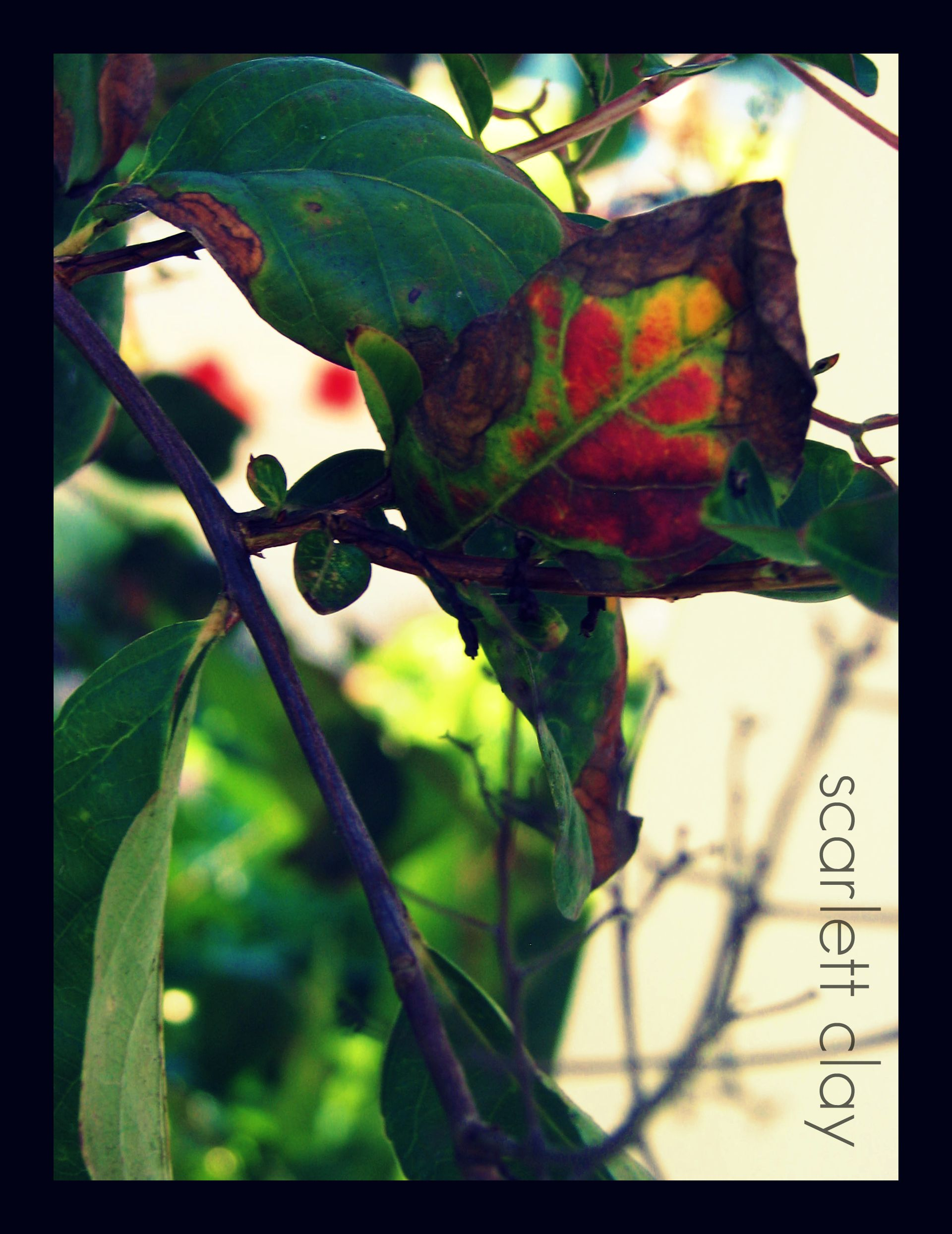 fall leaves 09 1