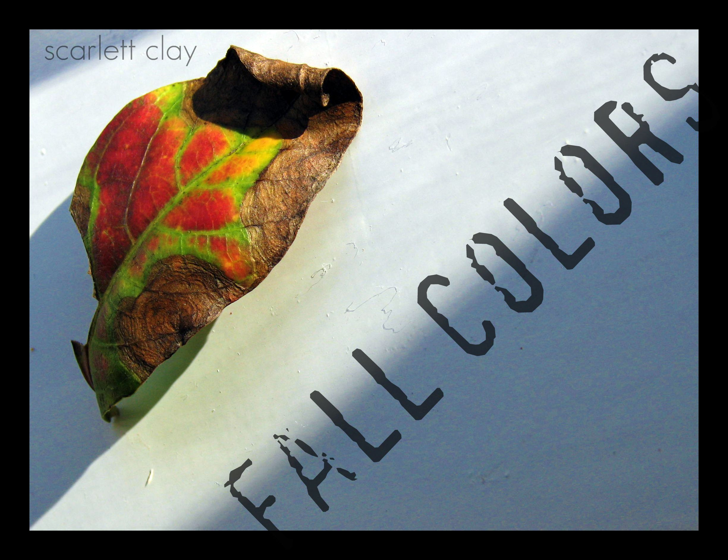 fall leaves 09 2