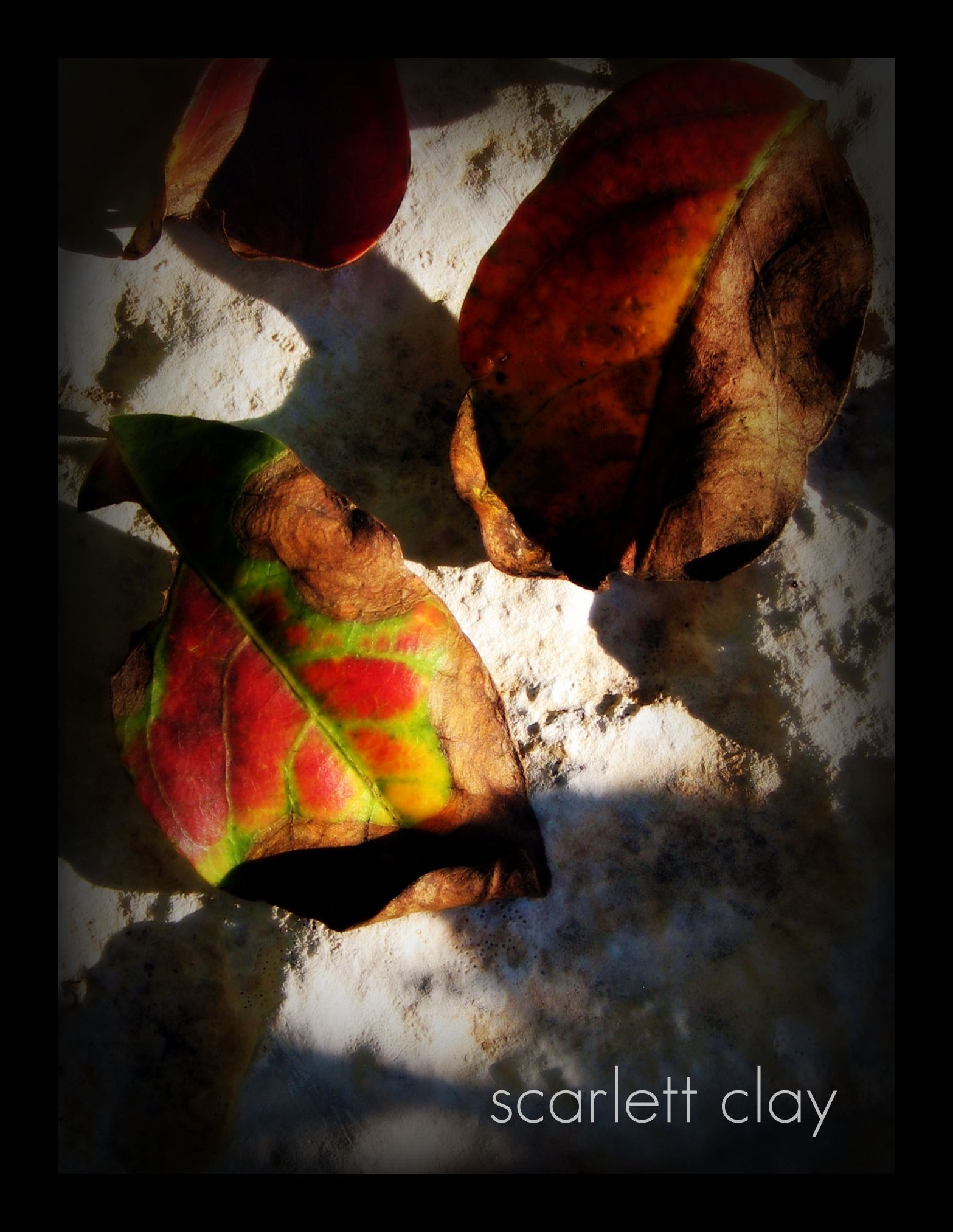 fall leaves 09  3