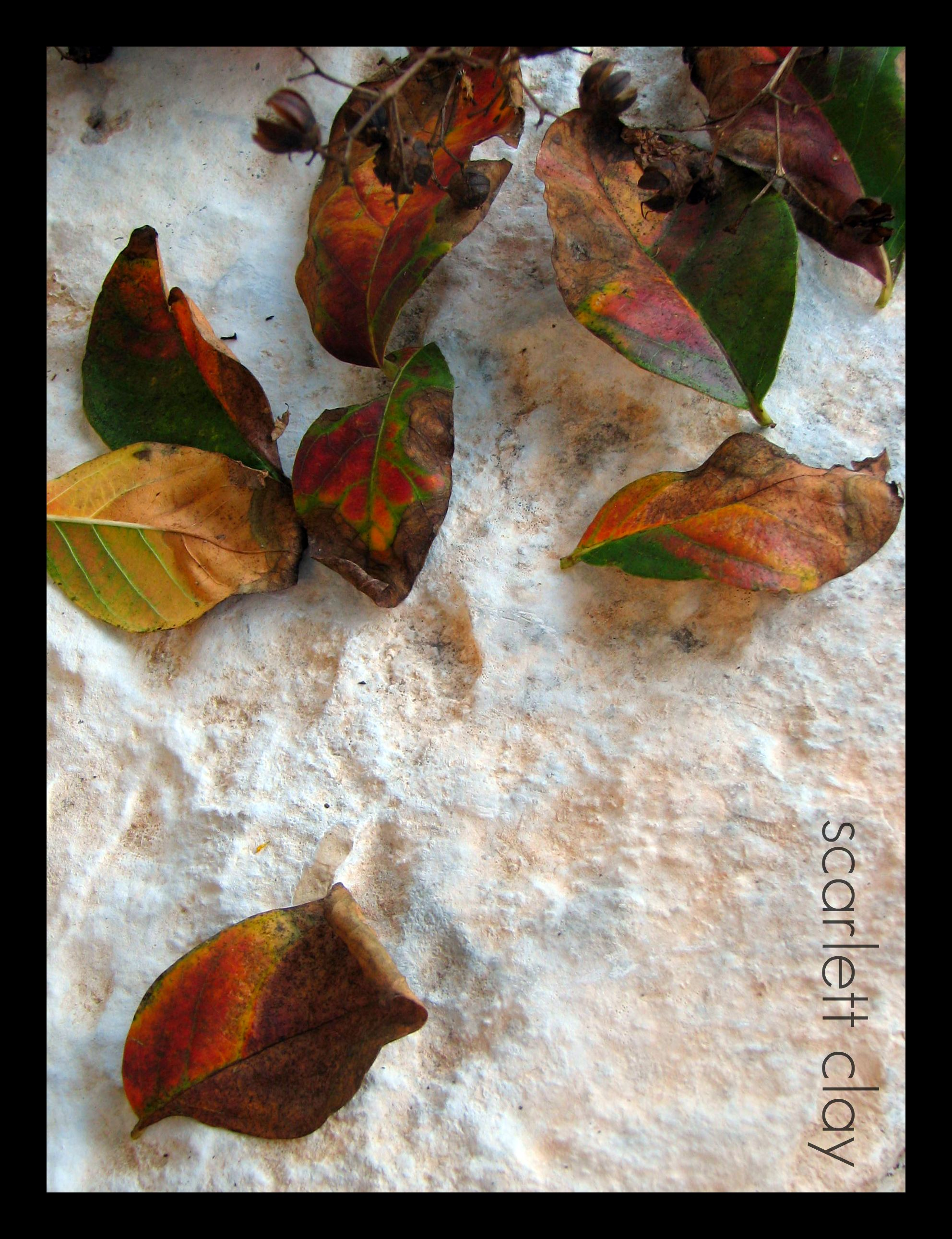 fall leaves 09  4