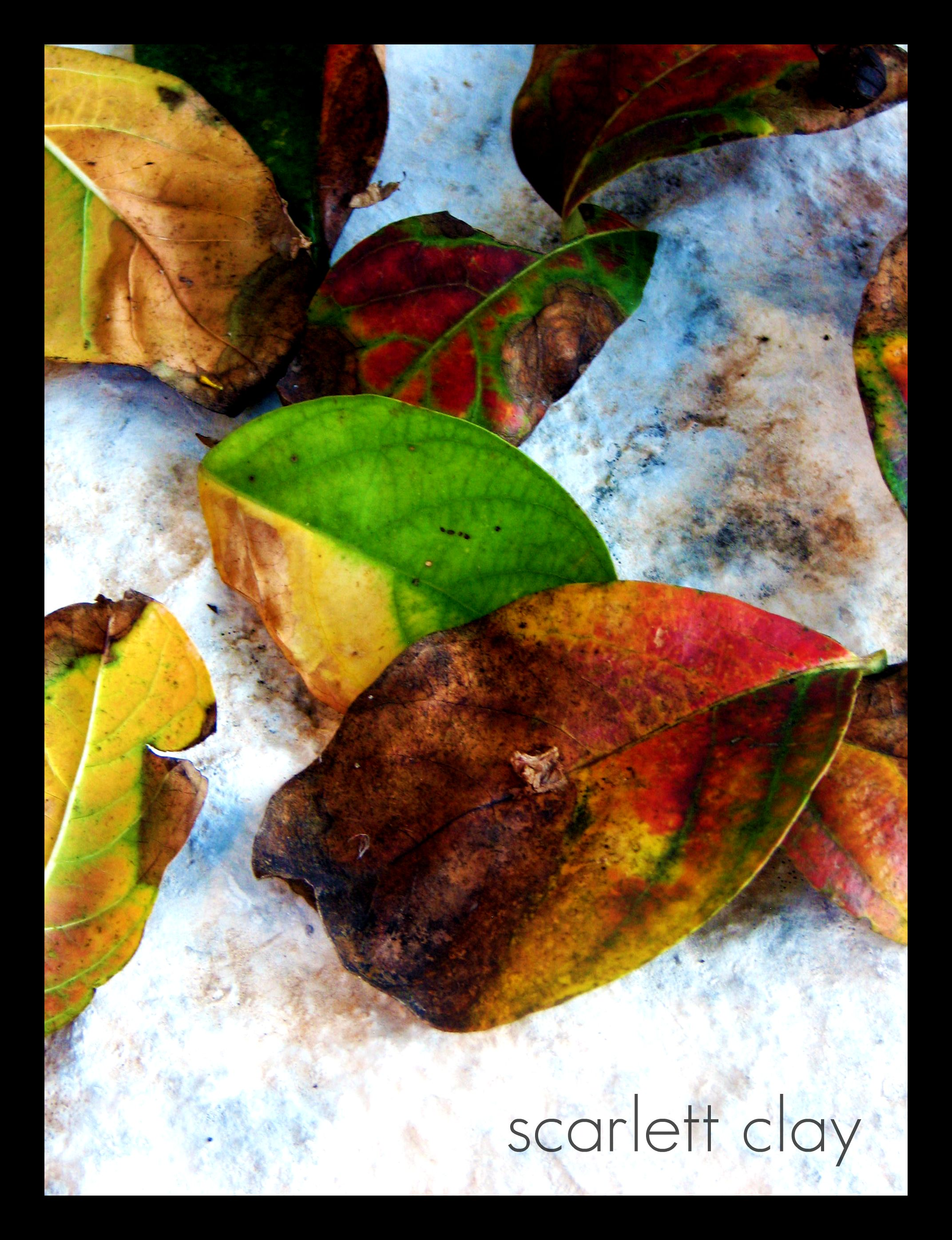 fall leaves 09  5